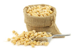 sprouted chick peas in a burlap bag  Stock Image