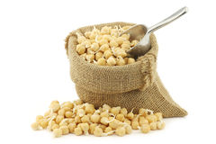 Sprouted chick peas in a burlap bag Royalty Free Stock Image