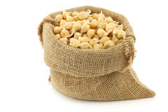 Sprouted chick peas in a burlap bag Stock Photography