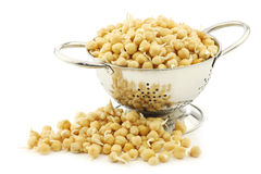 Sprouted chick peas in a metal colander Royalty Free Stock Photos