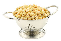Sprouted chick peas in a metal colander Stock Image