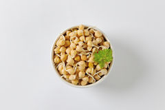 Sprouted chickpeas Royalty Free Stock Images