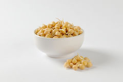 Sprouted chickpeas Royalty Free Stock Photography