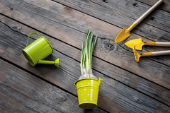 Sprouted garlic, vegetables, herbs, things take care of them, watering can, shovels, rakes Stock Image