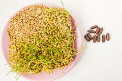 Sprouted grains on a white background. Royalty Free Stock Image
