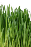 Sprouted green grass Stock Photo