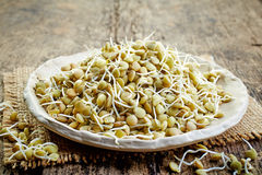 Sprouted Lentil Seeds Stock Image
