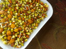 Sprouted Lentils. Colorful sprouted lentils inside a paper plate Stock Photos