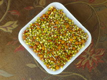 Sprouted Lentils. Colorful sprouted lentils inside a paper plate Stock Photo