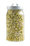 Sprouted mung beans Royalty Free Stock Photo