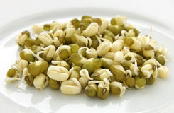 Sprouted mung beans Royalty Free Stock Image