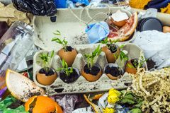 Sprouted plants at the landfill Royalty Free Stock Photo