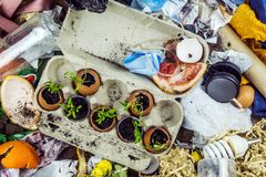 Sprouted plants at the landfill Stock Photos