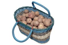 The sprouted potato in a basket Royalty Free Stock Photography