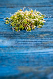 Sprouted radish seeds Royalty Free Stock Image