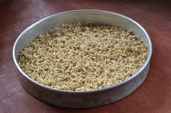 Sprouted rice stock image