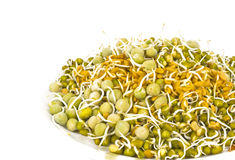 Sprouted Seeds. Sprouted legume seeds in a plate on white background Stock Photos