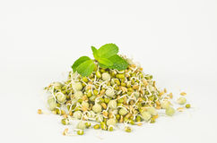 Sprouted Seeds. Sprouted legume seeds on white background Stock Image