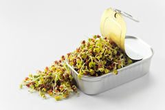 The sprouted seeds in an open can Royalty Free Stock Photos