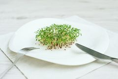 Sprouted seeds. sprouts seed cress lettuce. greens stock image