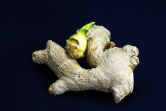 Sprouted or stale ginger Royalty Free Stock Photography