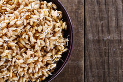 Sprouted wheat germ in a bowl closeup. Sprouted wheat germ in a bowl over rustic wooden background. Closeup, copy space Royalty Free Stock Images