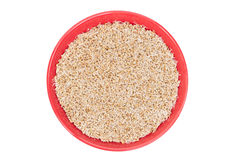 Sprouted wheat Royalty Free Stock Image