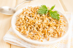 Sprouted wheat seeds Stock Photo