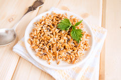 Sprouted wheat seeds Stock Image