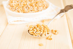 Sprouted wheat seeds Royalty Free Stock Photo