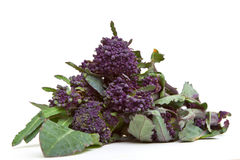 Sprouting Broccoli Royalty Free Stock Photos