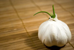Sprouting garlic Stock Photos