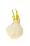 Sprouting garlic Stock Photos