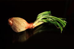 Sprouting garlic in low light Royalty Free Stock Photo