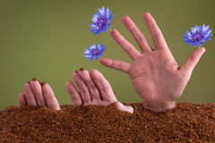 Sprouting hand Royalty Free Stock Image