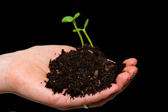 Sprouting hands Stock Images