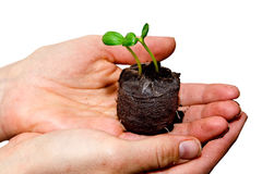 Sprouting hands royalty free stock photo