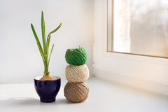 Sprouting onion and three skeins of thread Stock Photography