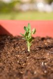 Sprouting Plant royalty free stock photos