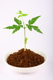 Sprouting plant on red earth . Stock Photo