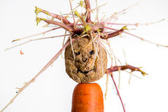 Sprouting potato- face on carrot Stock Photography