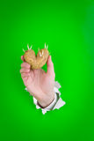 Sprouting potato and hand Royalty Free Stock Photos