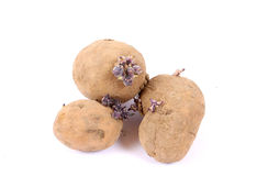 Sprouting potatoes Royalty Free Stock Photos