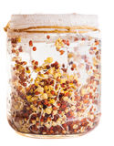 Sprouting Radish Seeds Growing in a Glass Jar Stock Photo