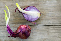 Sprouting red onions whole and half on rustic wood Stock Image