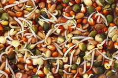 Sprouting scions. Background of tasty sprouting scions Royalty Free Stock Photography