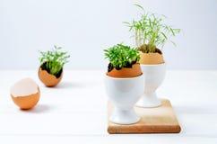 Seedlings in eggshells Stock Image