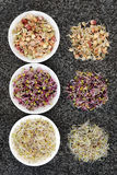 Sprouting Seeds and Beans Stock Photo