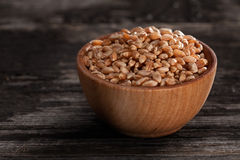 Sprouting Seeds in a Wooden bowl. Close-up of Wheat Sprouting Seeds in a Wooden bowl Royalty Free Stock Photography