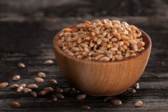 Sprouting Seeds in a Wooden bowl. Close-up of Wheat Sprouting Seeds in a Wooden bowl Royalty Free Stock Photo